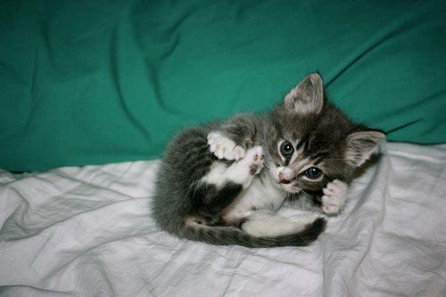 Подборка котят