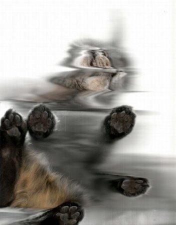 Отсканированные кошки. ФОТО