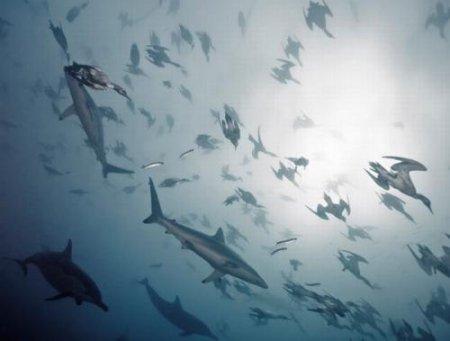 Голодные дельфины и птицы устроили охоту на сардин. ФОТО