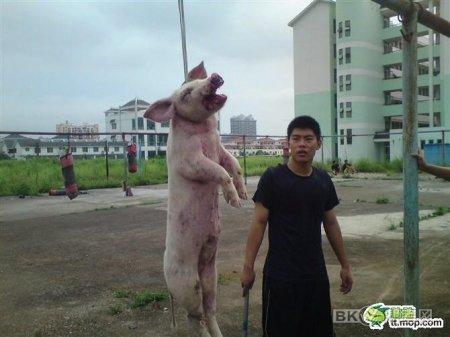 Современный Китай глазами блогеров
