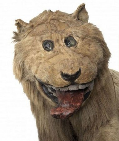 Чучело льва, подаренное шведскому королю Фредерику I