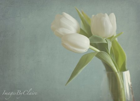 Claire Brocato