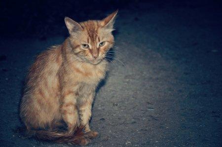 Фотограф Плакитина Ольга