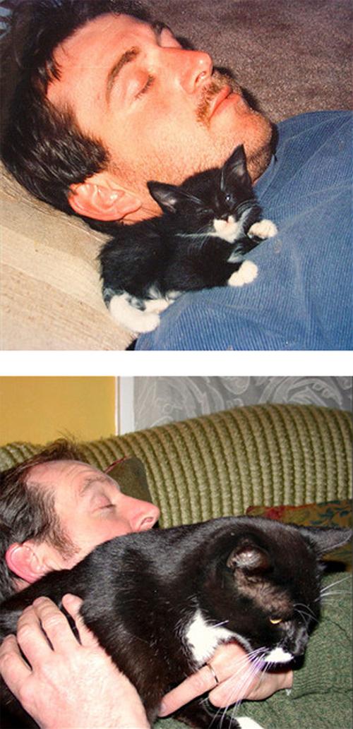 Коты растут