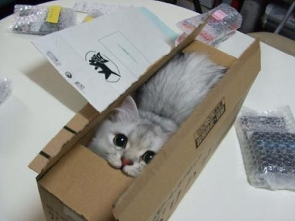 Котенок в коробке картинки