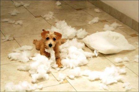 Собаки-разрушаки