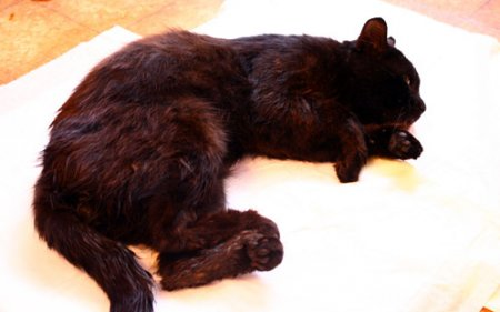 В День знаний челябинские школьники закидали камнями дворового кота…