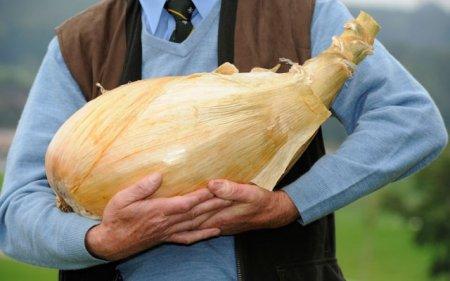 Нормальный лук, без ГМО