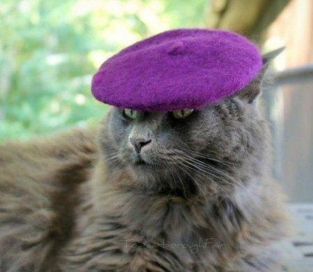 Кошачьи головные уборы