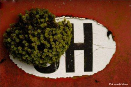 Автокладбище в Швейцарии