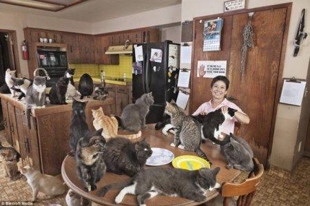 Санаторий для котов