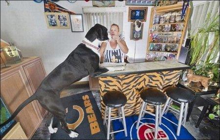 Самая высокая собака - дог Нова