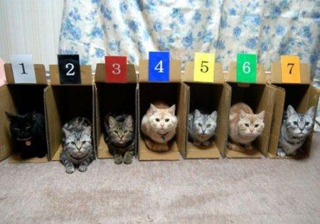 Грузите котов коробками!