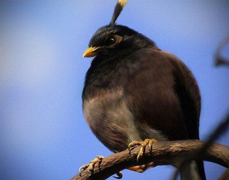 Злые птицы