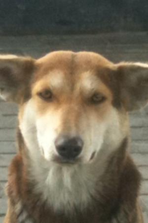 Собака хитряка