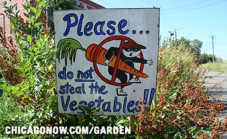 Растущий тренд: в США всё чаще овощи крадут прямо с огорода