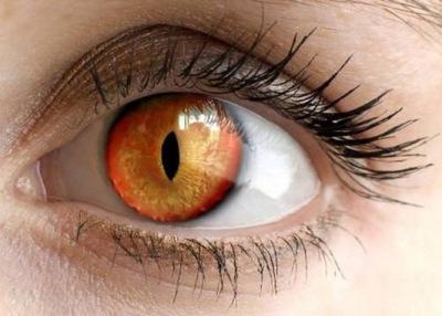 Глазная щель в глазном яблоке