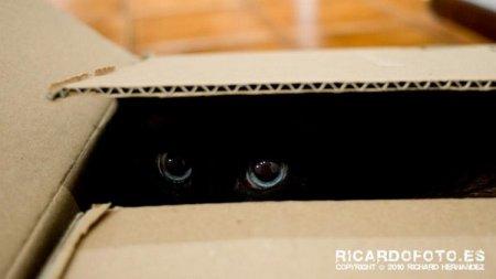 Коты и маскировка