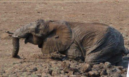Спасение слона