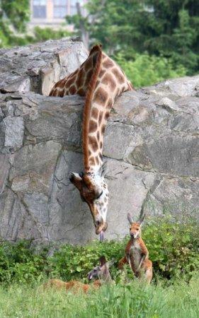 Забавные животные - 3