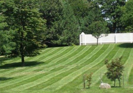 А что у тебя на заднем дворе на даче?