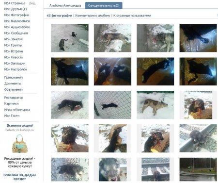 Задержан живодер, убивший больше 100 собак