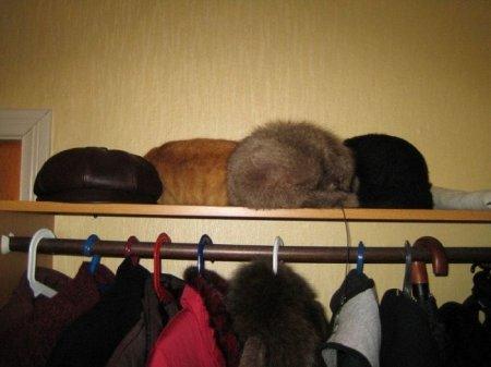 Найди кота! Причем 47 раз!