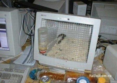 Креативные домики для животных