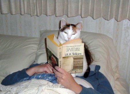 Разгневанные коты