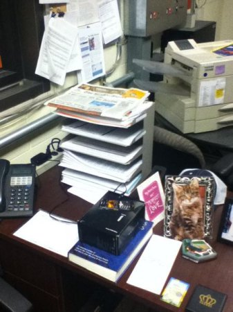 Офисный кототроллинг