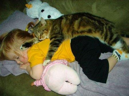 Кто круче, коты или собаки?