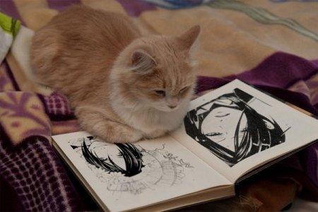 Коты-читатели