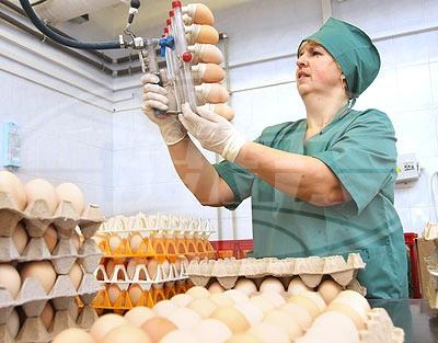 Почему белорусские яйца растут в цене вслед за долларом?