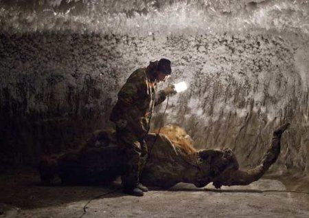 В Якутии найден уникально сохранившийся мамонтенок