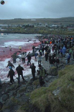 Традиционная рыбалка на Фарерских островах