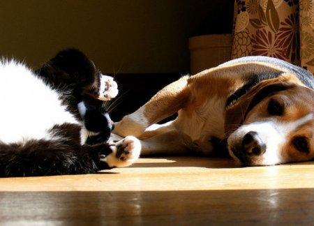 Фотобомбы: коты против собак
