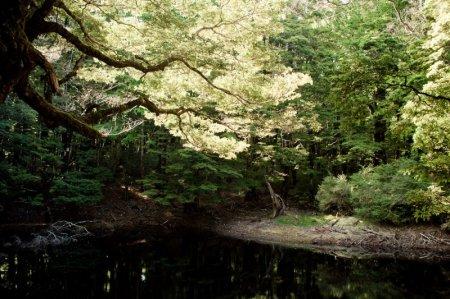 Эльфийские леса Новой Зеландии или места, где снимали трилогию «Властелин Колец»