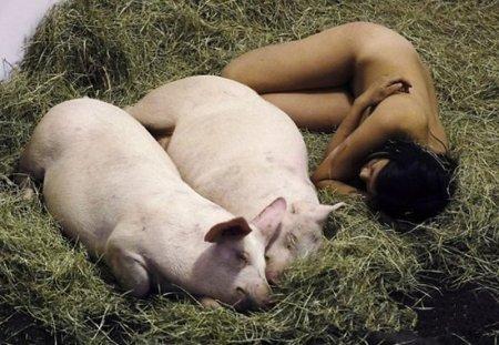 Голая девушка 104 часа провела со свиньями