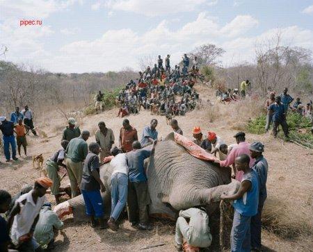 Был слон - нет слона