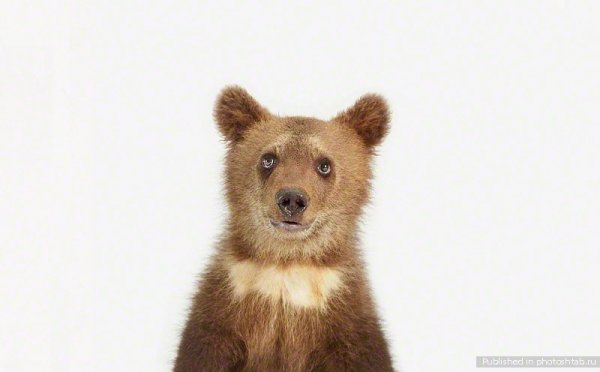 Портреты детёнышей животных