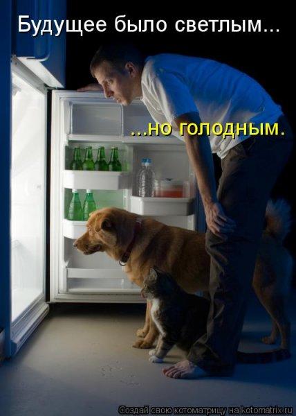 Котоматрицы-41