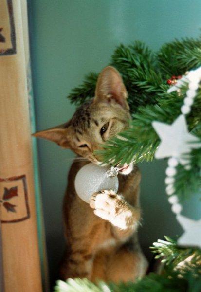 Коты против Рождества