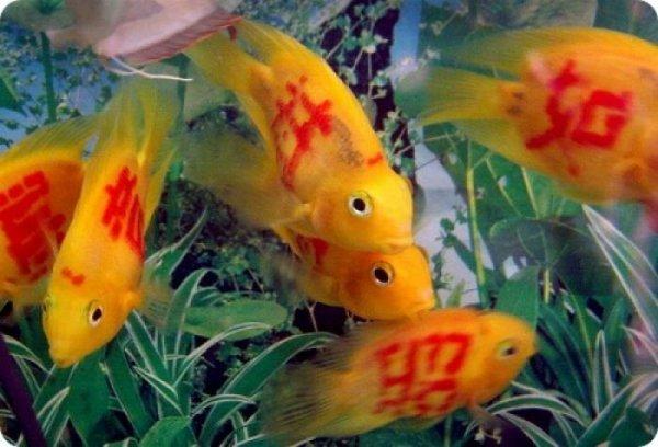 Татуированные рыбки
