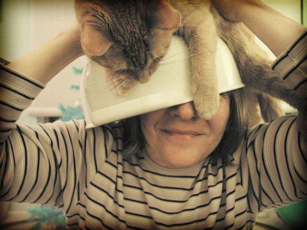 Сделать шапку из кота