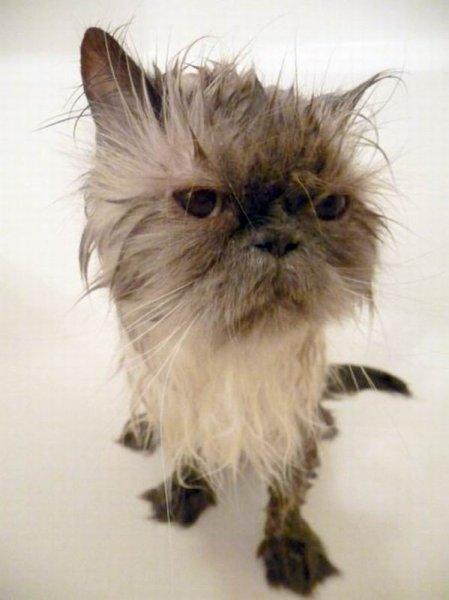 Мытье котов