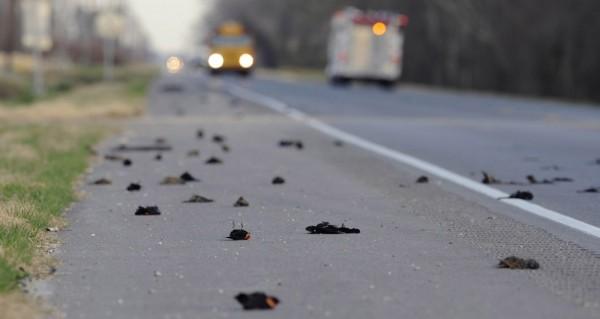 Массовая гибель  птиц в Арканзасе