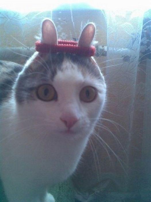 Домашние смешные коты