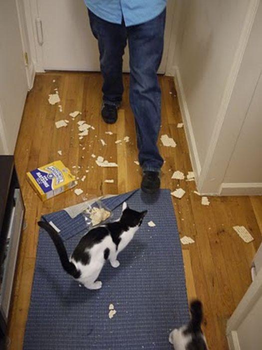 Хвостатые вредители - прикольные коты