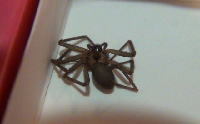 Что бывает от укуса паука