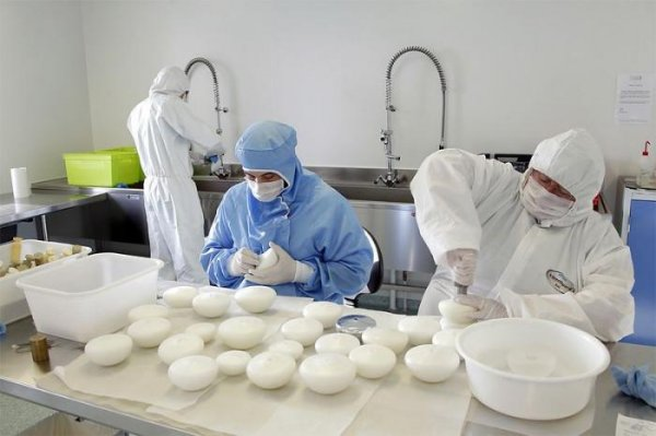 Фабрика по производству сисек
